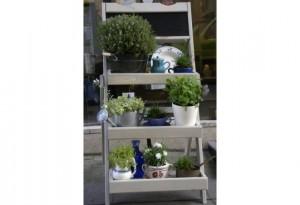 plantes vivaces composition